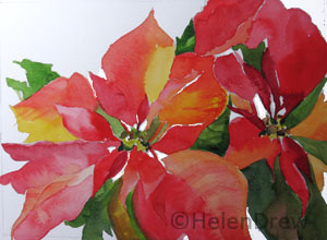 poinsettia final