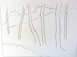 birches sketch