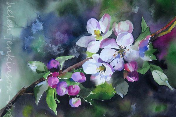apple-blossomF5A09999-A04C-CC00-3757-B5A81A5F3579.jpg